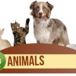 animal-teach