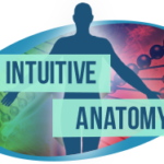 intutive-anatomy-teach