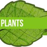 plant-teach